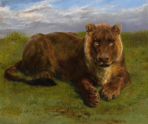 Art Prints of Lioness Posing by Rosa Bonheur