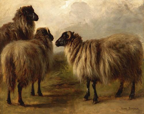 Art Prints of Three Wooly Sheep by Rosa Bonheur