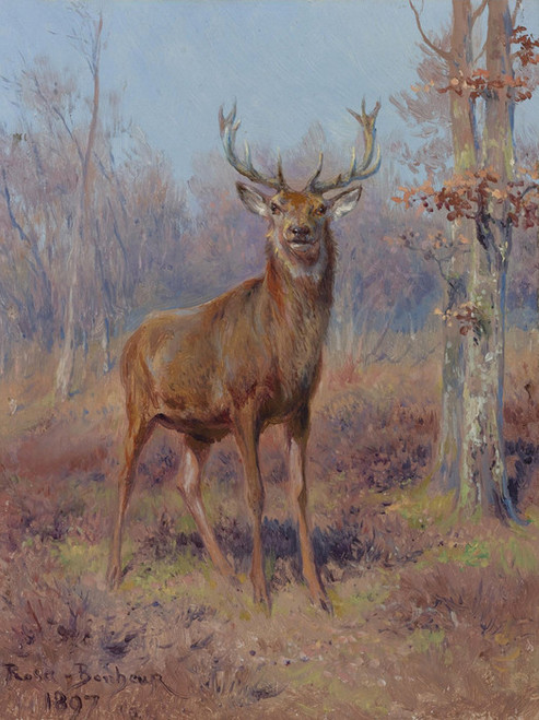 Art Prints of Young Stag in a Wooded Landscape by Rosa Bonheur