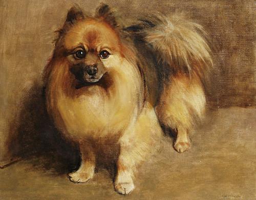 Art Prints of Portrait of a Pomeranian by Samuel Fulton