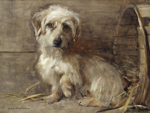 Art Prints of Dandie Dinmont by Samuel Fulton