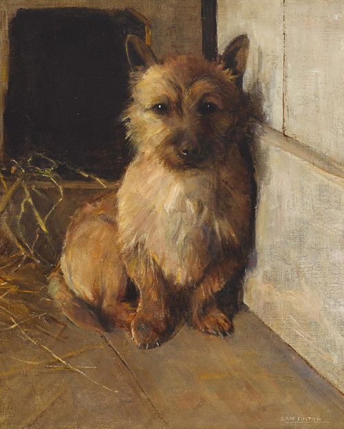 Art Prints of A Cairn Terrier in a Kennel by Samuel Fulton