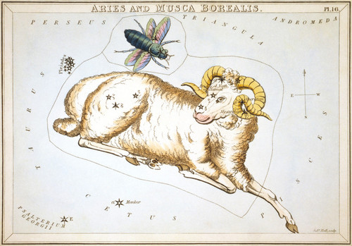 Art Prints of Aries and Musca Borealis, Plate 16, View of the Heavens by Sidney Hall
