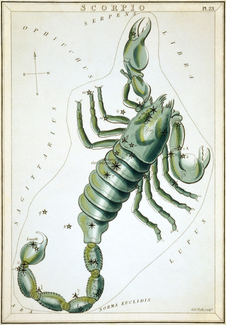 Art Prints of Scorpio, Plate 23, View of the Heavens by Sidney Hall