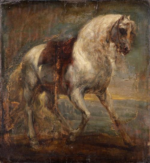 Art Prints of A Grey Horse by Sir Anthony Van Dyck