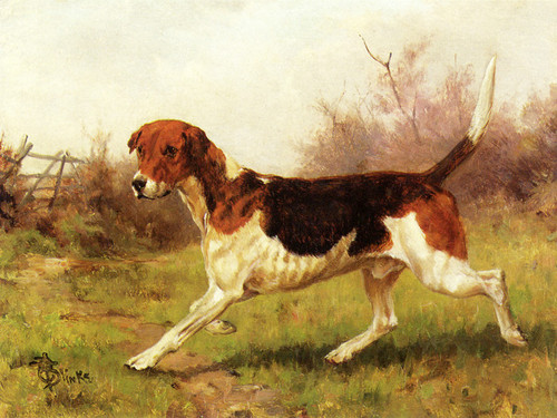 Art Prints of A Foxhound by Thomas Blinks