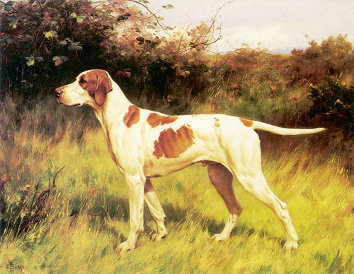 Art Prints of English Pointer by Thomas Blinks