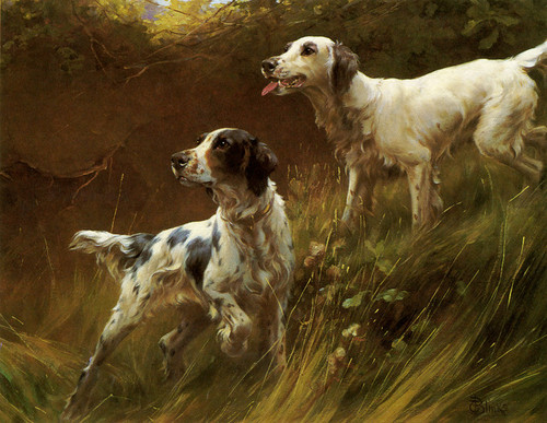 Art Prints of English Setters by Thomas Blinks