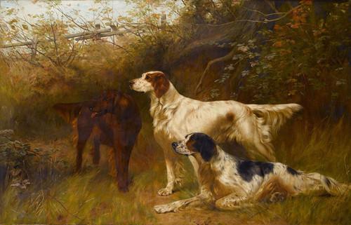 Art Prints of English and Irish Setters by Thomas Blinks