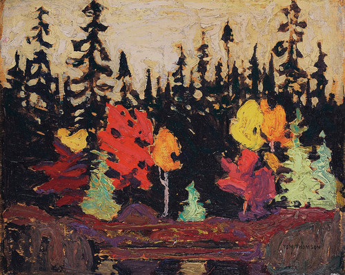 Art Prints of Black Spruce and Maple by Tom Thomson