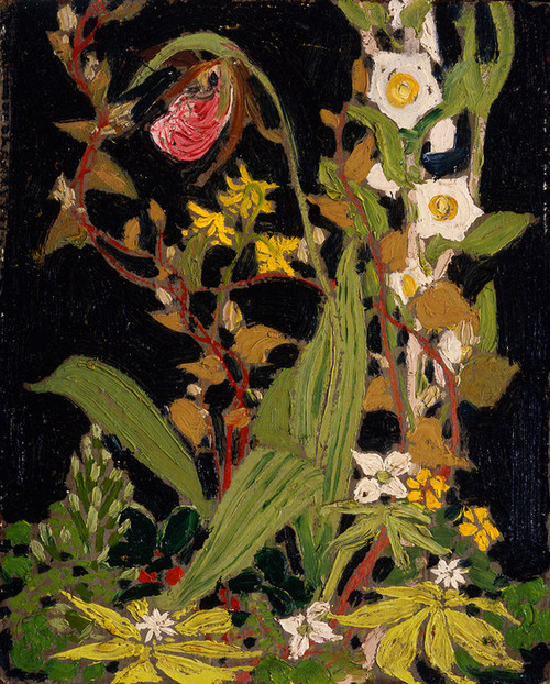 Art Prints of Moccasin Flower by Tom Thomson