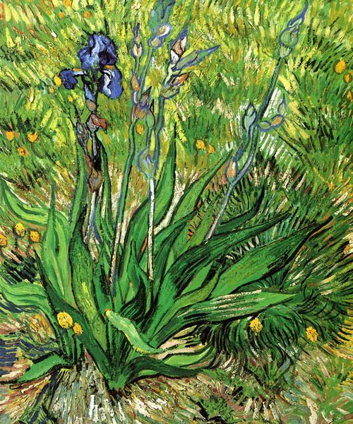 Art Prints of The Iris, 1890 by Vincent Van Gogh