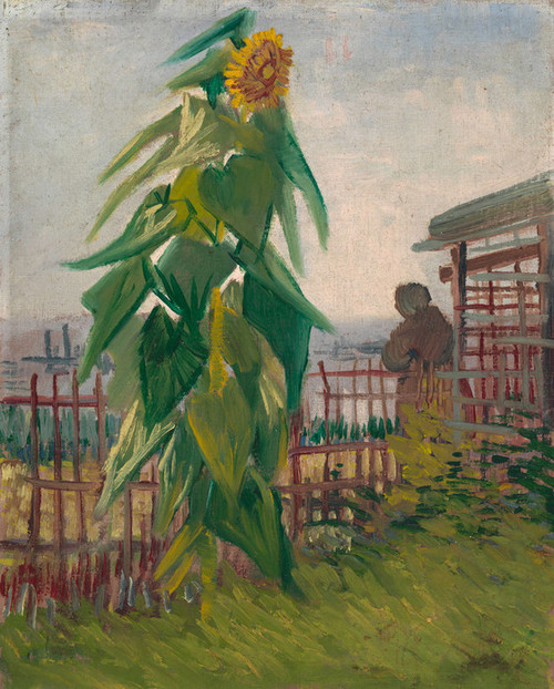 Art Prints of Alottment with Sunflower by Vincent Van Gogh