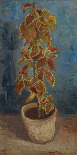 Art Prints of Flame Nettle in a Flowerpot by Vincent Van Gogh