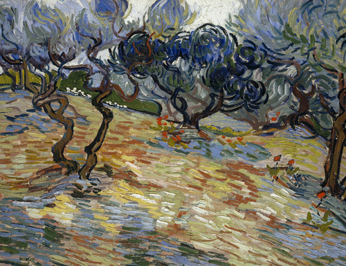 Art Prints of Olive Trees, 1889 by Vincent Van Gogh