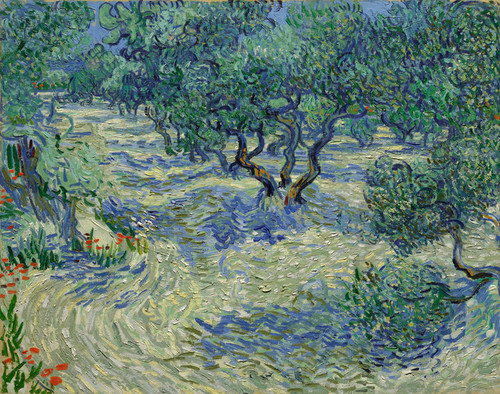 Art Prints of Olive Orchard by Vincent Van Gogh