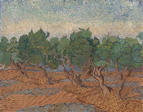 Art Prints of Olive Grove by Vincent Van Gogh