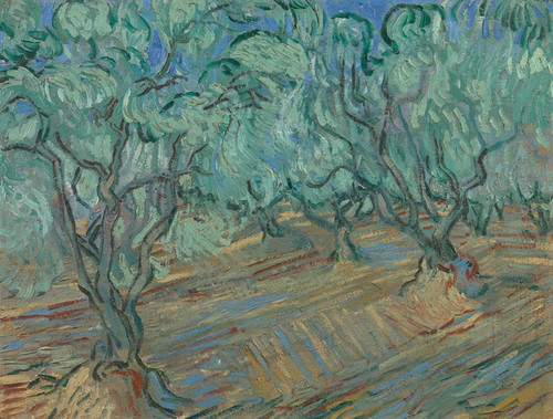 Art Prints of Olive Grove, 1889 by Vincent Van Gogh