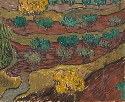 Art Prints of Olive Trees on a Hillside by Vincent Van Gogh