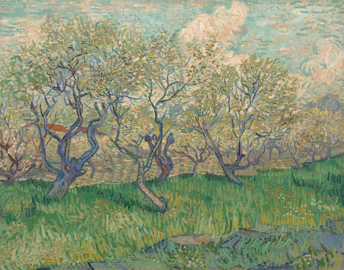 Art Prints of Orchard in Blossom, 1889 by Vincent Van Gogh