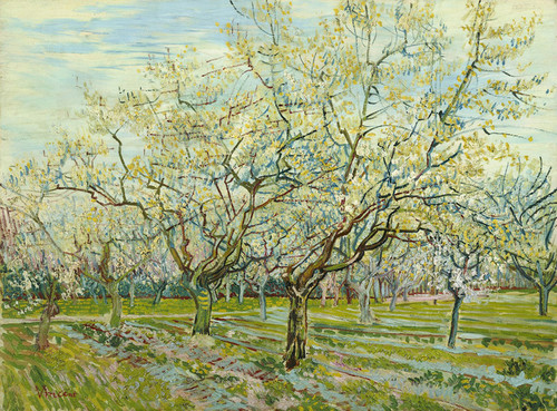 Art Prints of The White Orchard by Vincent Van Gogh