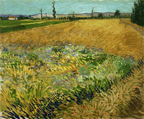 Art Prints of Wheatfield by Vincent Van Gogh