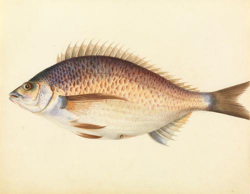 Art Prints of Perch by W. B. Gould