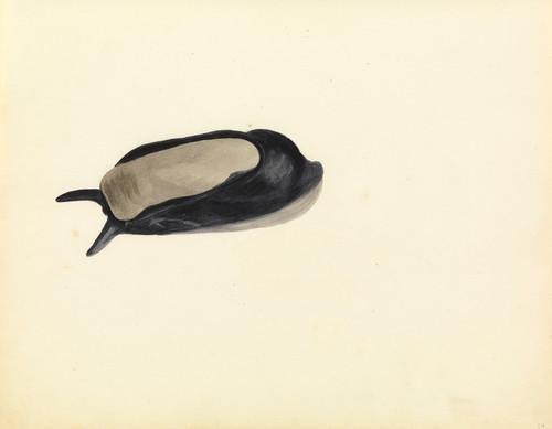 Art Prints of Sea Slug by W. B. Gould