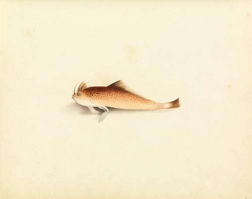 Art Prints of Walking Fish by W. B. Gould