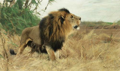 Art Prints of Berber Lion by Wilhelm Kuhnert