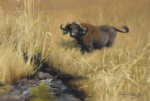 Art Prints of A Water Buffalo at a Watering Hole in the Savannah by Wilhelm Kuhnert
