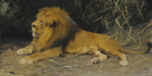 Art Prints of Lion in His Den by Wilhelm Kuhnert