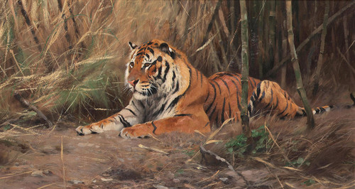 Art Prints of The Watchful Tiger by Wilhelm Kuhnert
