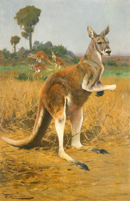 Art Prints of Red Kangaroos in the Outback by Wilhelm Kuhnert