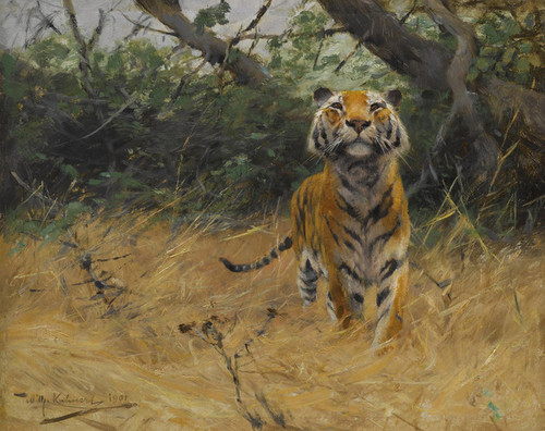 Art Prints of Tiger on the Watch by Wilhelm Kuhnert