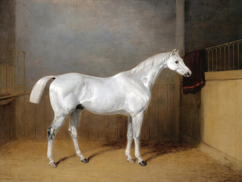 Art Prints of A Favorite Grey Horse Belonging to George Reed by William Barraud