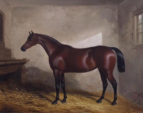 Art Prints of Portrait of the Hunter Skylark by William Barraud