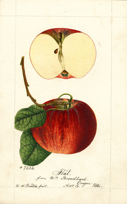 Art Prints of Flat Apples by William Henry Prestele