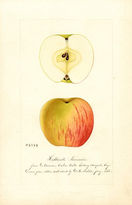 Art Prints of Hubbard's Pearmain Apples by William Henry Prestele