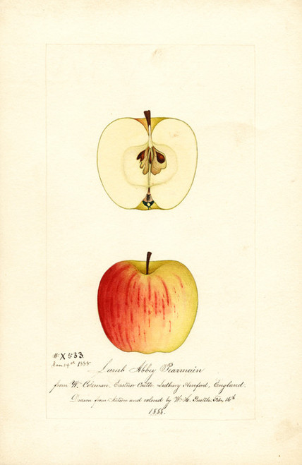 Art Prints of Lamb Abbey Pearmain Apples by William Henry Prestele