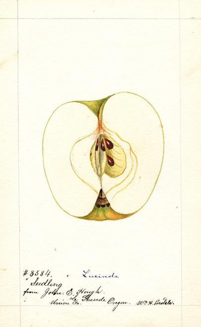 Art Prints of Lucinda Apple I by William Henry Prestele
