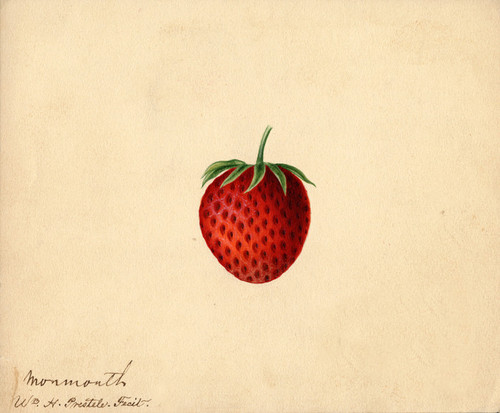 Art Prints of Monmouth Strawberry by William Henry Prestele