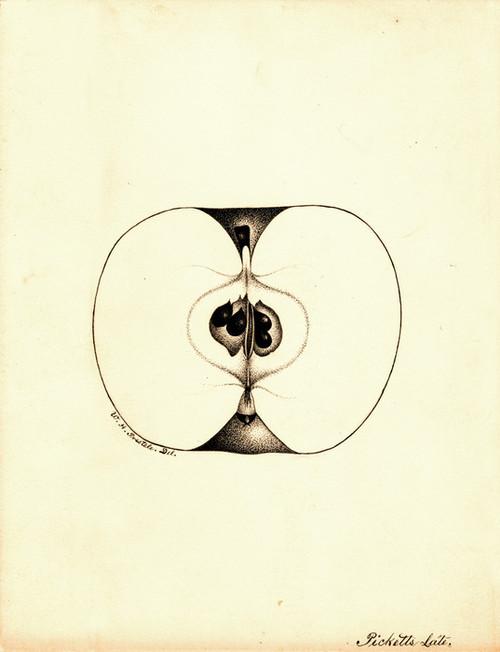 Art Prints of Pickett's Late Apple by William Henry Prestele