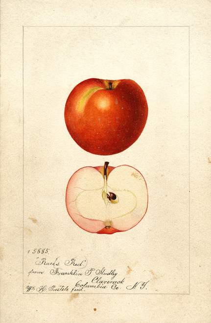 Art Prints of Race's Red Apples by William Henry Prestele
