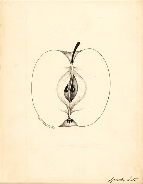 Art Prints of Sparks Late Apple by William Henry Prestele