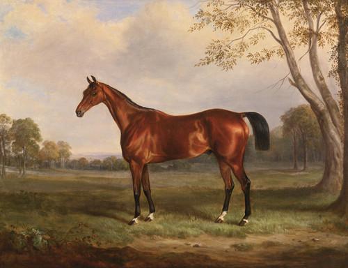 Art Prints of A Bay Hunter in a Landscape by William Webb