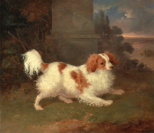 Art Prints of A Blenheim Spaniel by William Webb