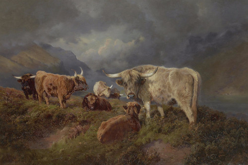 Art Prints of Highland Cattle by William Woodhouse