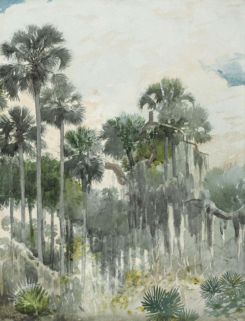 Art Prints of Florida Jungle by Winslow Homer