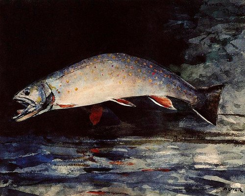 Art Prints of A Brook Trout by Winslow Homer